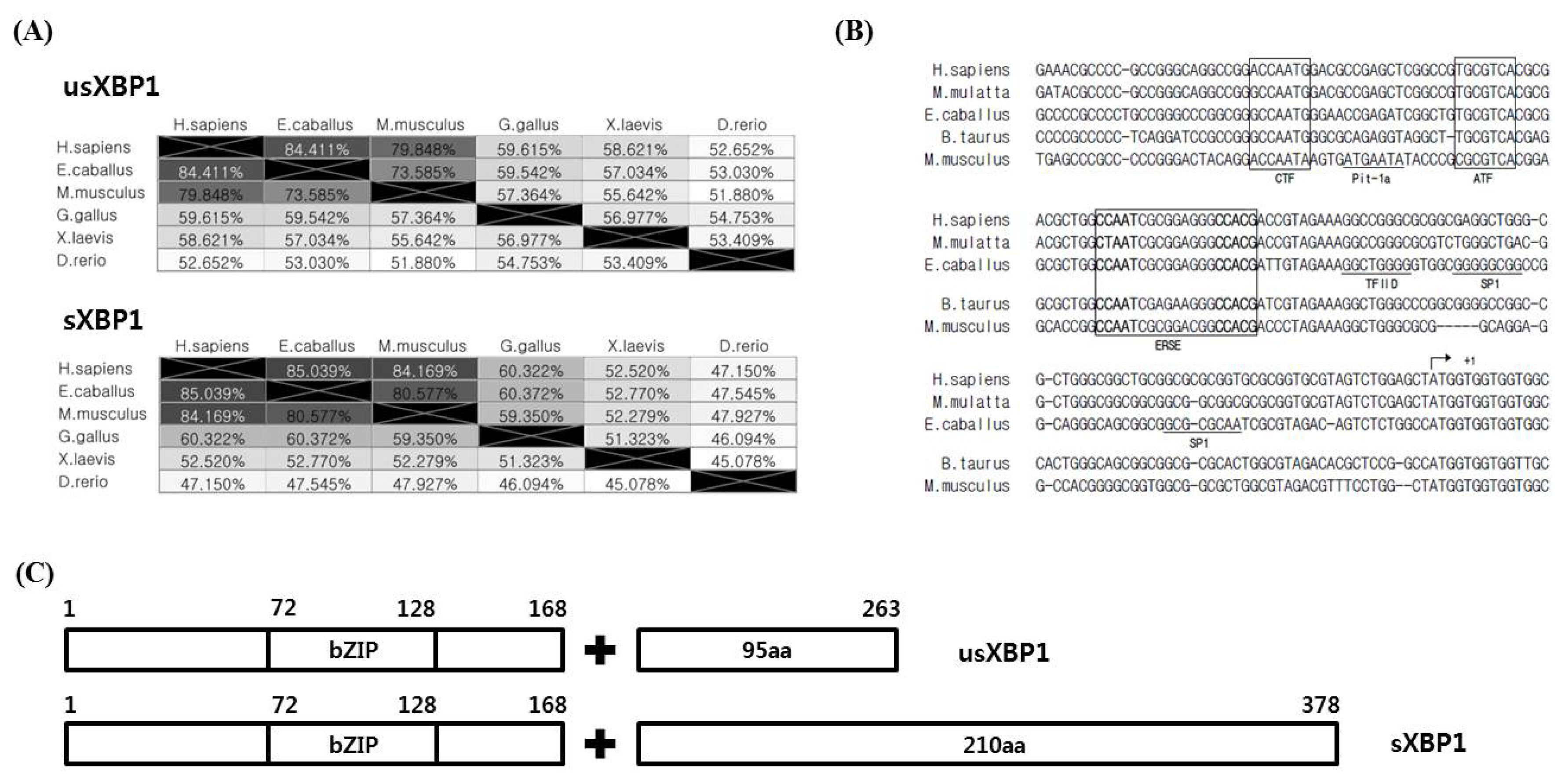 The effect of heat stress on frame switch splicing of X-box binding