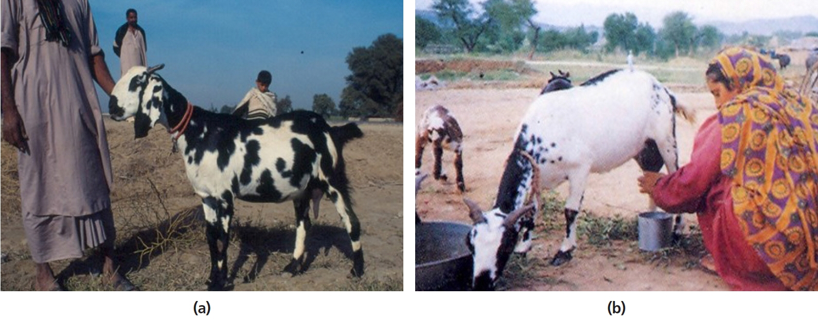 Current status, challenges and the way forward for dairy